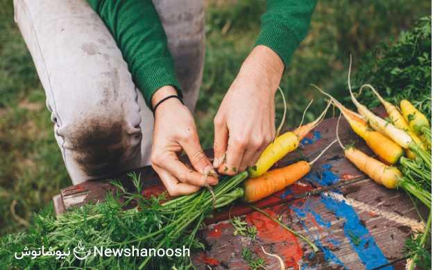 دمنوش های گیاهی - دمنوش نیوشا - خواص گیاهان